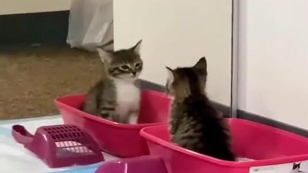 照镜子拉粑粑!猫:爷连拉屎都这么帅气
