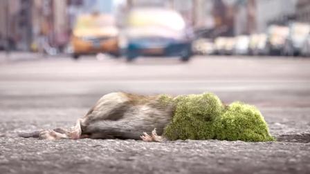 老鼠吃了一颗坏果子,身体发霉没人管,结果毁灭了人类文明