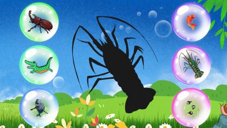 趣味识动物:哪些小动物被关进了泡泡里呢?认识巨嘴鸟龙虾等动物