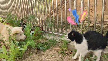 其实狗子也没什么坏心眼,它只是想跟猫咪玩一玩!