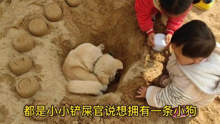 希望世界上所以狗子都能遇到一位好老板。