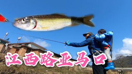 江西最近天气真好,背着小宝宝去河里钓鱼,收获肥肥大马口
