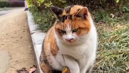 有些流浪猫就是这么信任人,你帮过它一次,它就会黏着你