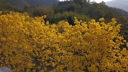 惠州市新园沉香种植发展股份有限公司