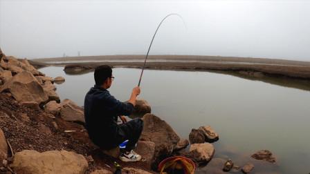 江边枯水坑野钓,鱼口也太好了,清点鱼获回家,不料拿起抄网一看心碎了