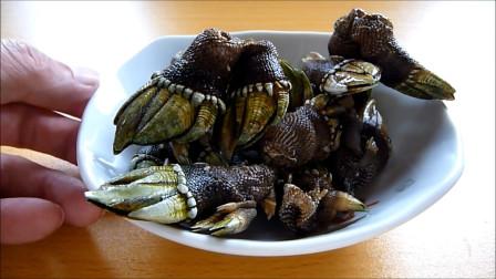 来着地狱的海鲜食物,长的有点像乌龟的脚,这能吃吗?