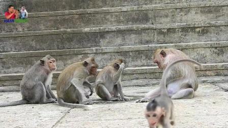母猴阿马拉虐待阿米拉,这种痛苦几乎每天都在发生!