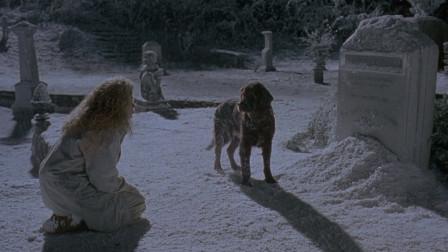 丈夫死后投胎成狗狗,千里寻找妻子,来到自己坟前痛哭