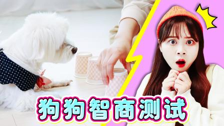 【萌宠日记】coco的IQ测试!她究竟是不是天才犬呢?