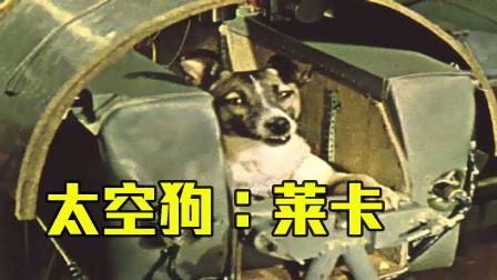 曾经有很多动物进入过太空!俄罗斯的狗现在还在太空飞着哪!