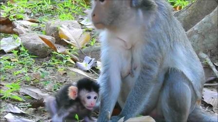 猴宝杰登恐惧又害怕!站在面前的是妈妈吗?为什么它从来没抱过我