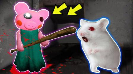 当仓鼠迷宫遇到机器猪,它能否成功逃脱呢?全程惊险又爆笑!