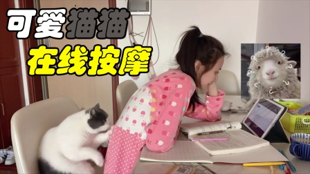 搞笑视频:妹子你到底是怎么办到的!居然让猫主子给你按摩?