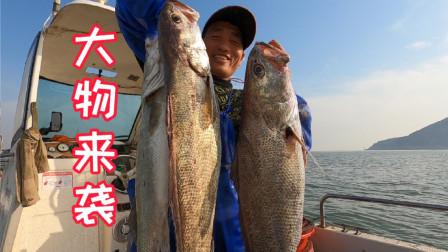 今天阿杰赶海运气爆棚,许久不见的大物扎堆出现,起鱼过程太刺激