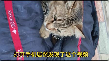 猫咪搓手手,太有喜感了吧!
