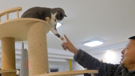 老爸不停招惹猫,猫忍无可忍怒目一爪,爸:手破了你赔!喵:活该