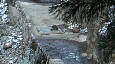 超级乖宝宝,小猴子给劳累的妈妈抓虱子,顺便按按摩!
