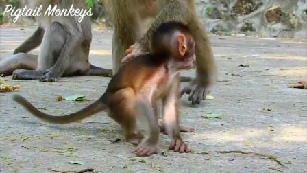 超级有趣的小猴子!珍妮和它的大姐祖玛弟弟约翰一起愉快玩耍