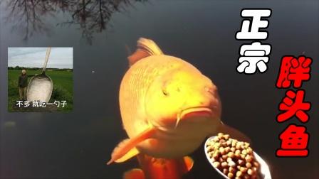 搞笑视频:大哥你拿勺子喂鱼时,有考虑过鱼的感受吗?太沙雕了!