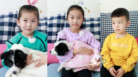 小狗狗初次到家,苏菲娅和艾米儿给它们取了什么名字呢?