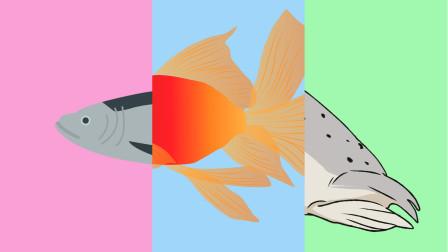 趣味识动物:哪三块拼图能拼出一只小动物呢?认识海参黄鹂等动物