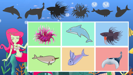 趣味识动物:跟随美人鱼一起去认识海洋动物吧!认识独角鲸等动物