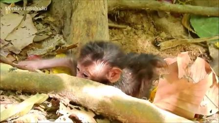 姿势销魂!猴哥趴在地上模样怪异,看完才知道真相!
