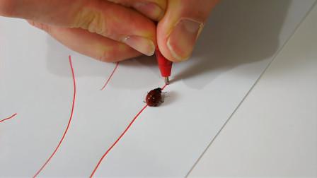 用圆珠笔在瓢虫面前画一条线,神奇的现象出现了,这是什么原理?