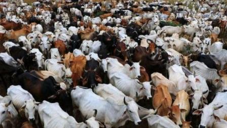 """印度又一动物""""泛滥"""",数量达到了3亿头,政府都束手无策"""