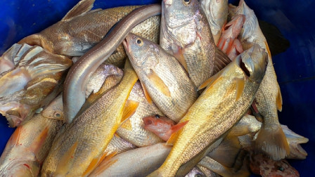 阿杰傍晚下十筐排钩,第二天起钩渔获居然比昨天还好,小赚几百块
