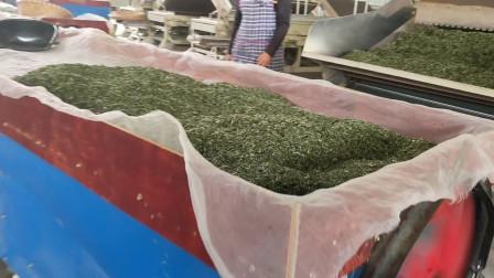 去村里茶厂看茶叶,带大家看看茶叶加工,这茶叶如何