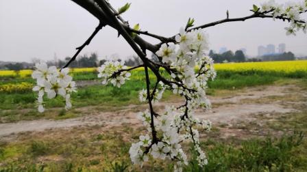 《春天的脚步》