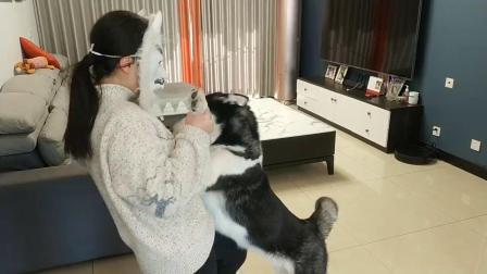 戴狼面具在狗狗面前,狗狗被吓得快哭了