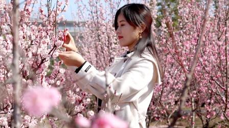 《陌上花开等你来》春暖花开,心情舒畅!