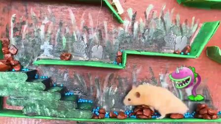 植物大战僵尸,小老鼠勇闯僵尸的世界