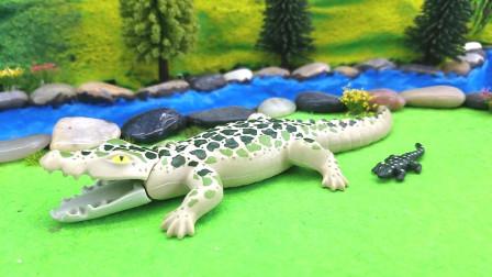 朋友们参观可爱的鳄鱼宝宝