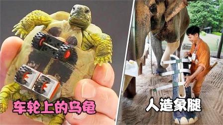 5个装上人造假肢的动物,即使在最绝望的情况下,仍然会有出路