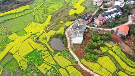 航拍湖南祁东县归阳镇幸福村,金色油菜花绘出醉美田园仙境