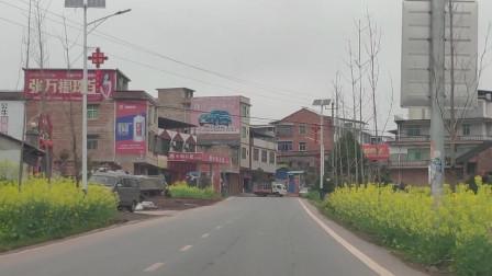 春节故乡行:2分钟穿越祁东鸟江镇主街,街口的油菜花开啦