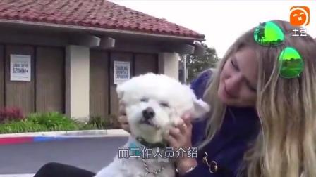 车流中的小流浪狗