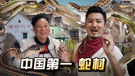 260集 300万条毒蛇聚集,探秘中国第一蛇村