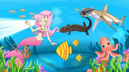 趣味识动物:小美人鱼今天要带我们认识哪些水生小动物呢?