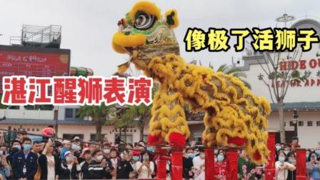 实拍湛江醒狮梅花桩表演,活灵活现难度高,引来万人围观