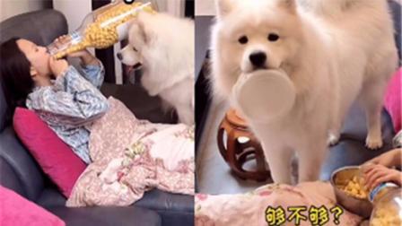 狗子看主人吃零食馋的不行 发现用盆能得到后赶紧叼来自己的饭盆