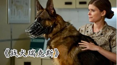 这只战犬作战10万个小时,救了无数战士,却要被安乐死!战争片