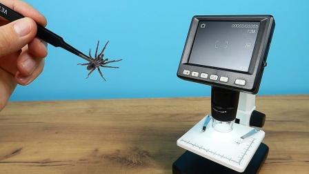 把蜘蛛放大50倍能看到啥?老外用显微镜测试,画面不敢直视