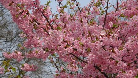 【创意九宫格】浪漫的樱花醉倒您