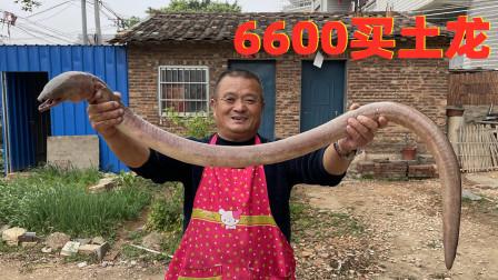 6600买2条罕见大土龙,一口汤就值500块!这是有多补啊?