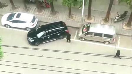 监控:当司机最后一秒钟,扭动方向盘溜走的那一刻,我觉得他的做法是对的