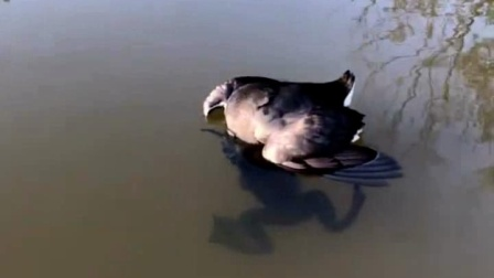 鸟儿将头插进水里一动不动 将其从水中抓出后惊讶不已